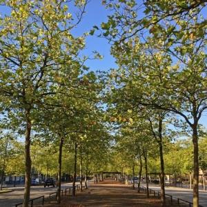 autumntrees2ccmk2ccboct2014